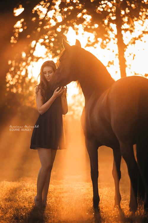 horse-21