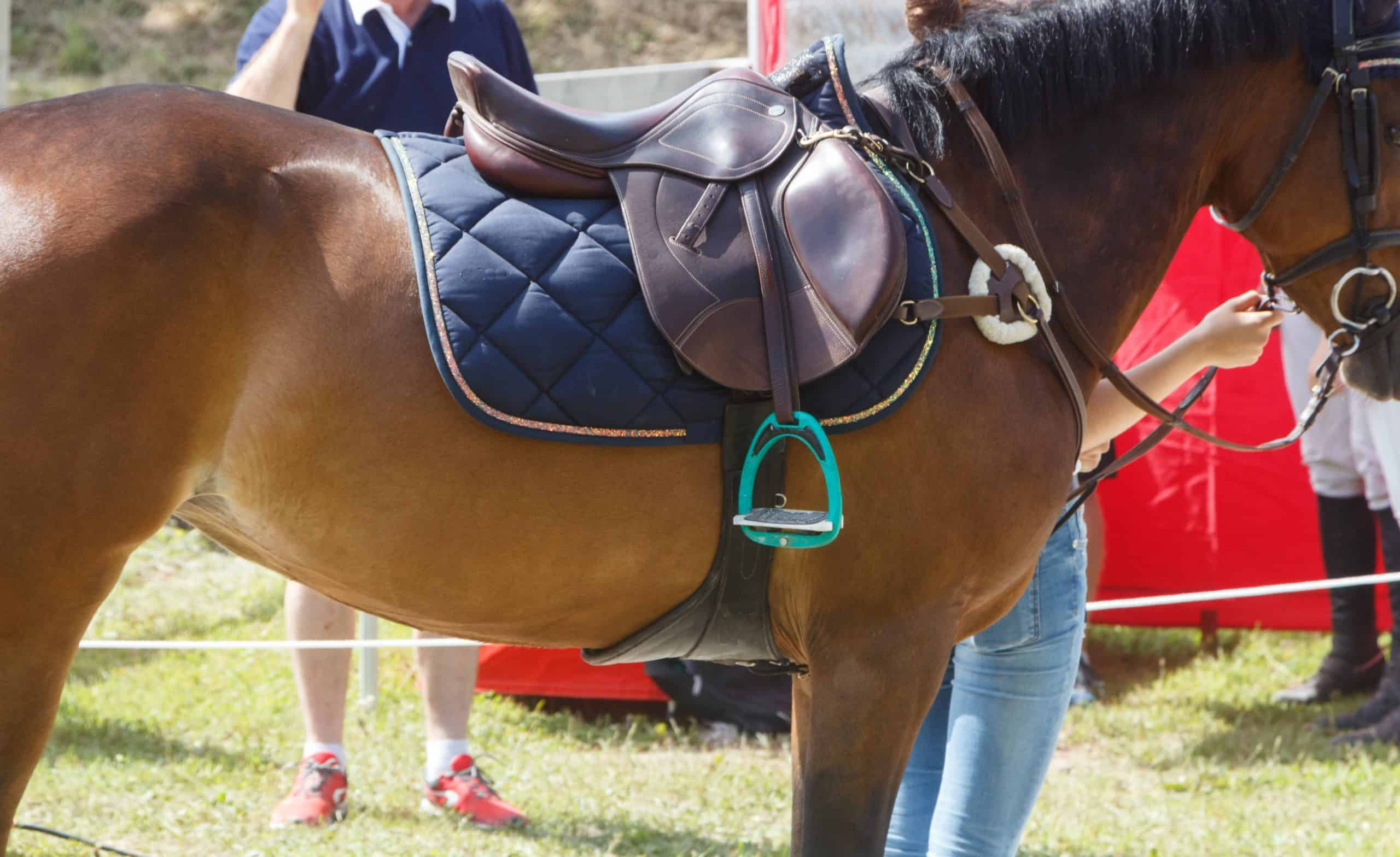 Saddle and blue pad on a bay horse