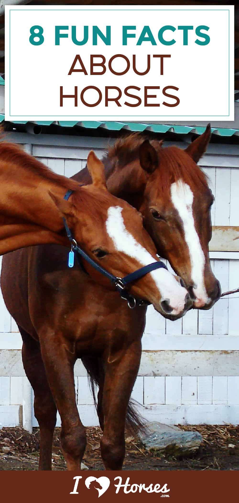 8 Fun Facts About Horses