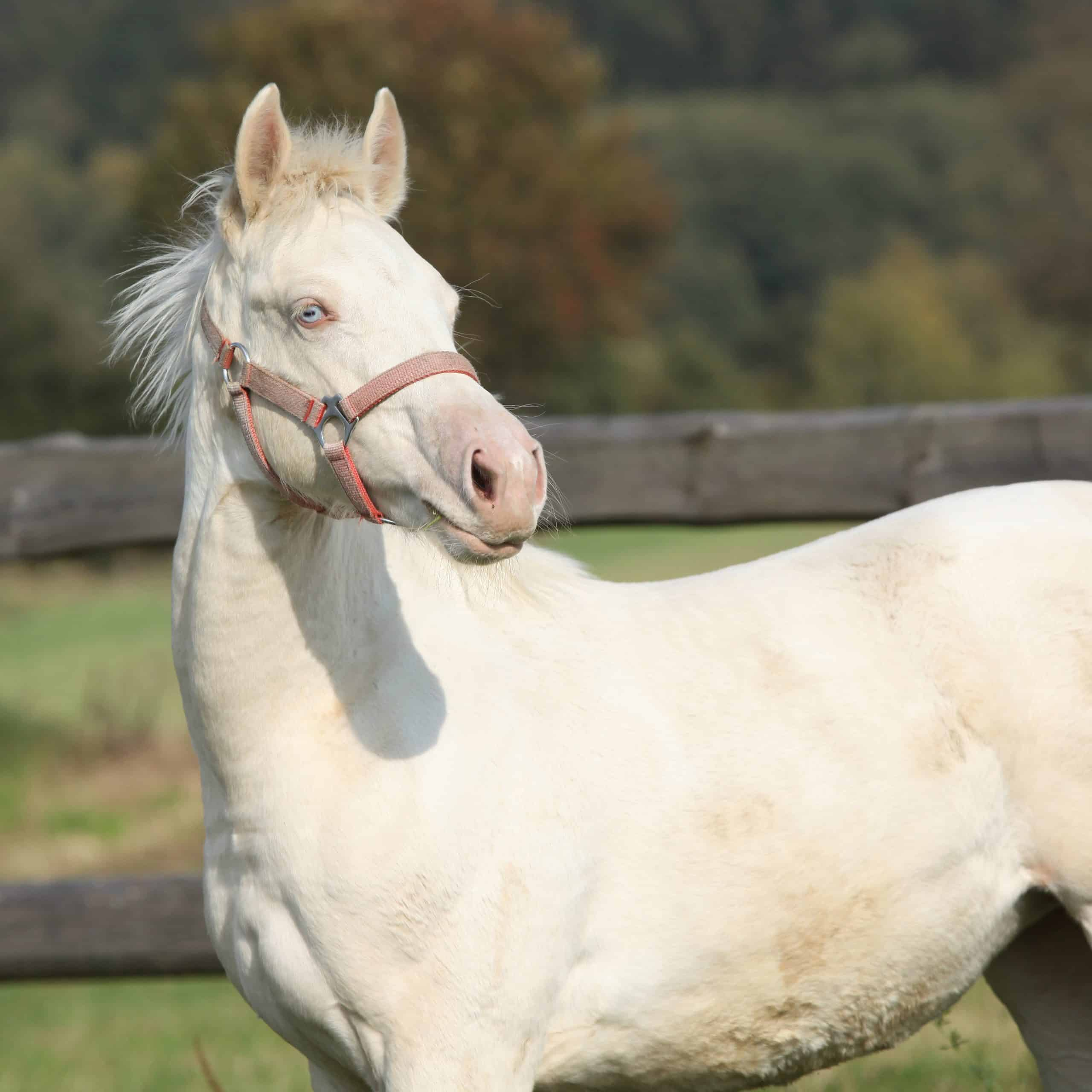fun facts about horses white horse