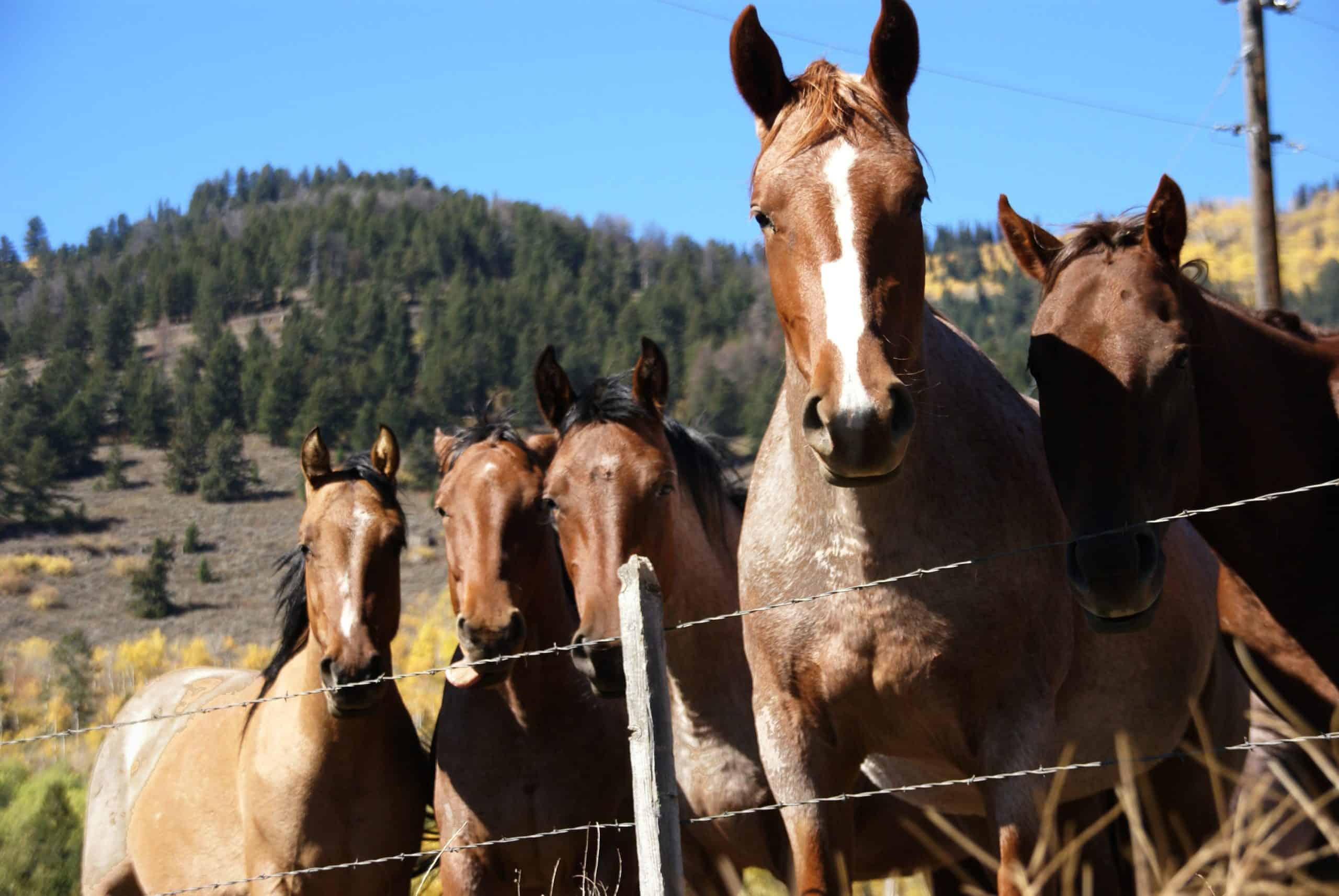 fun facts about horses image 2