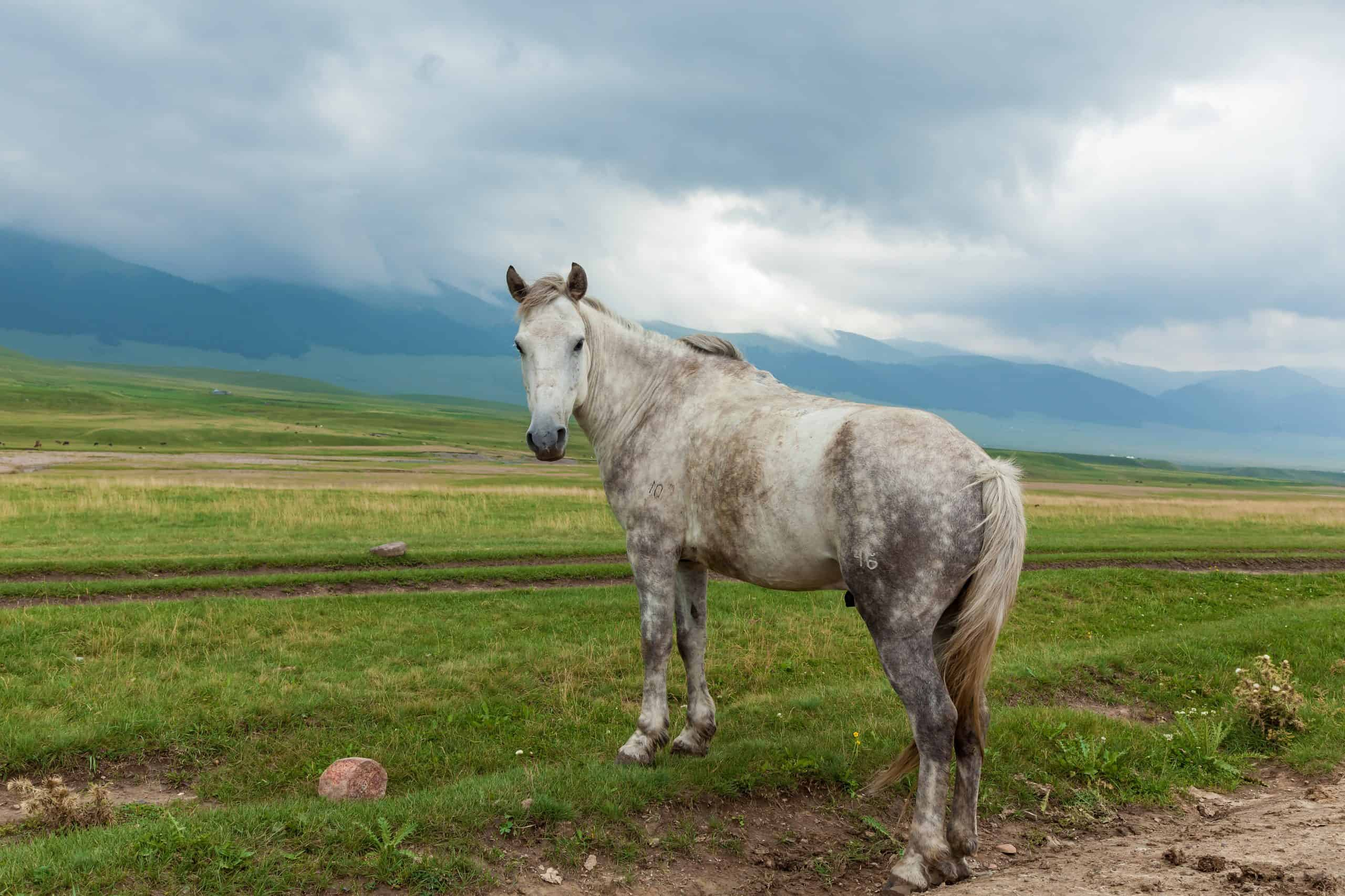 Horses interesting painting is on pasture and looks to the side,the wild nature of Kazakhstan