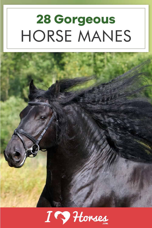 gorgeous horse manes