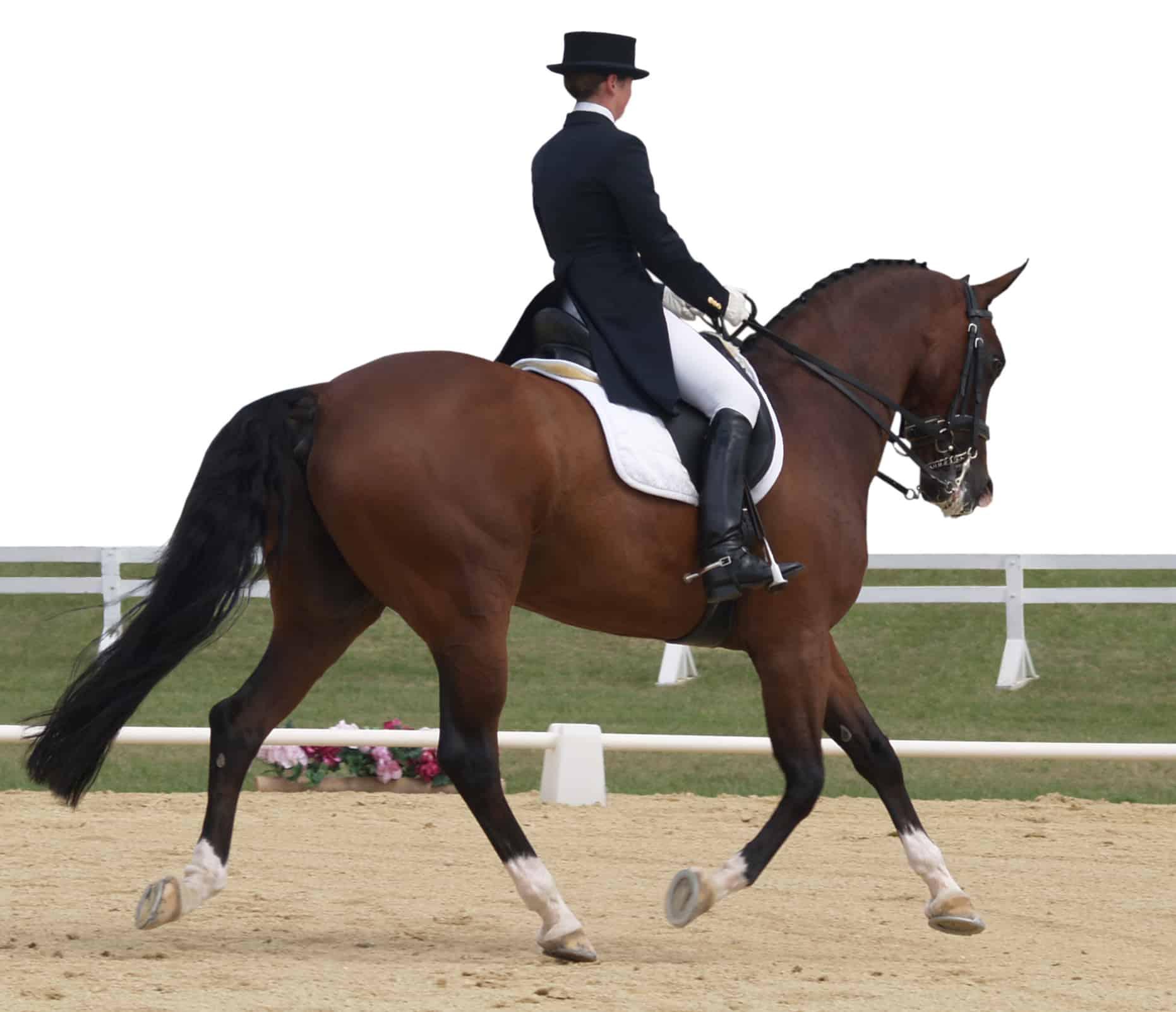 horseback riding styles dressage