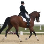 11 Different Horseback Riding Styles To Try