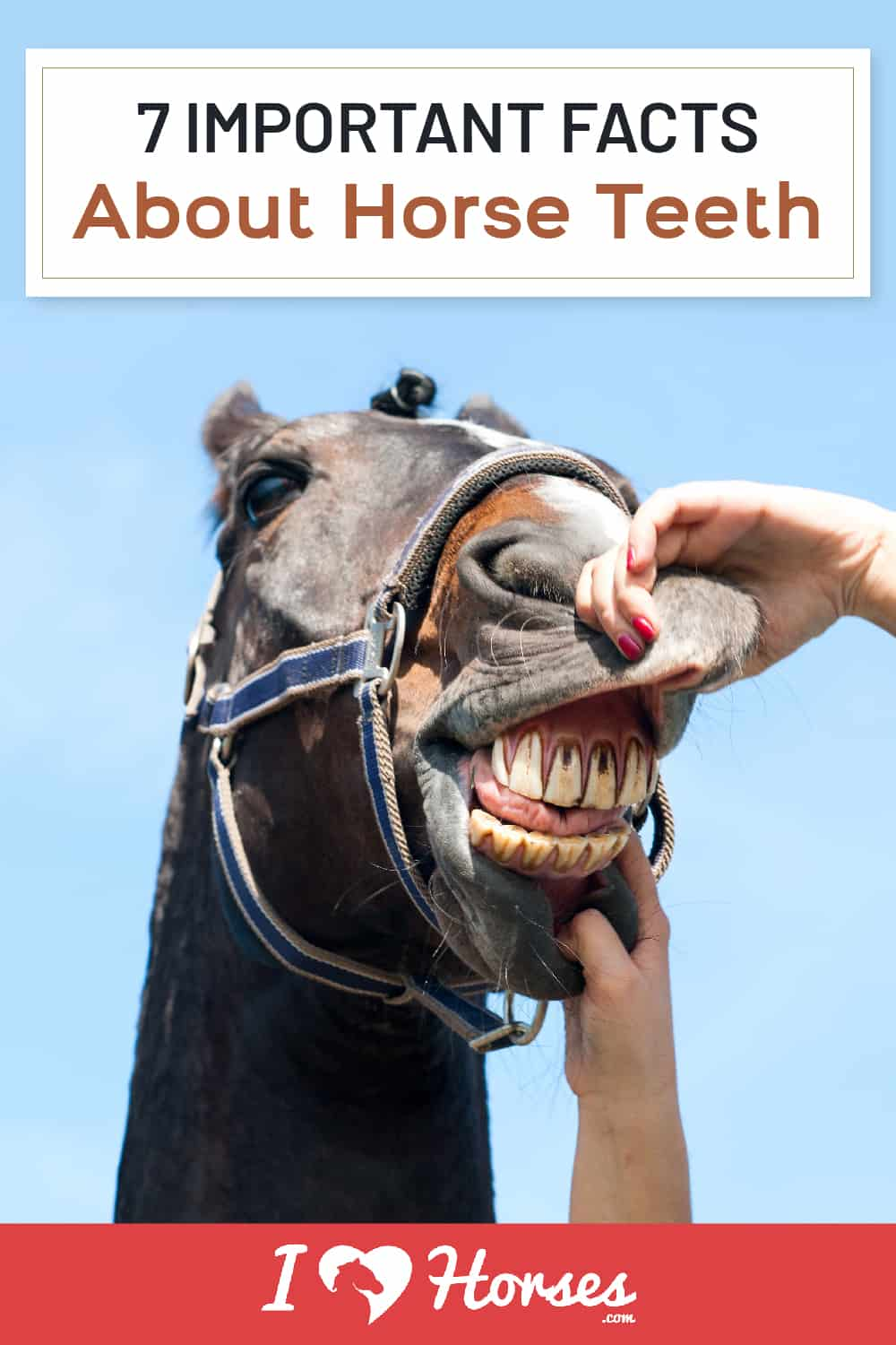 7 Important Facts About Horse Teeth-01-01