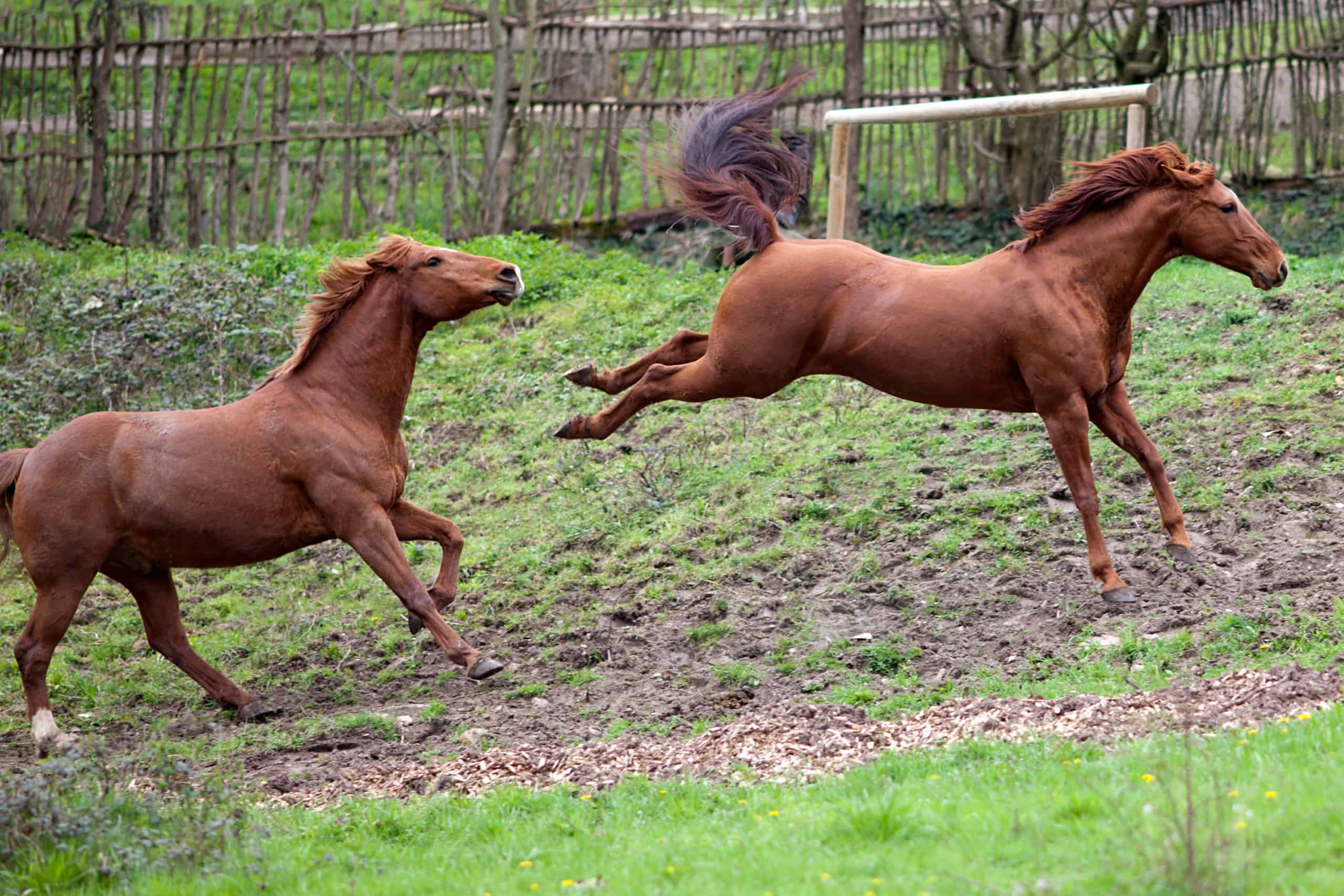 Horse buck and kick out