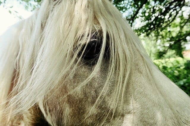 The 5 Most Common Types Of Cancer In Horses