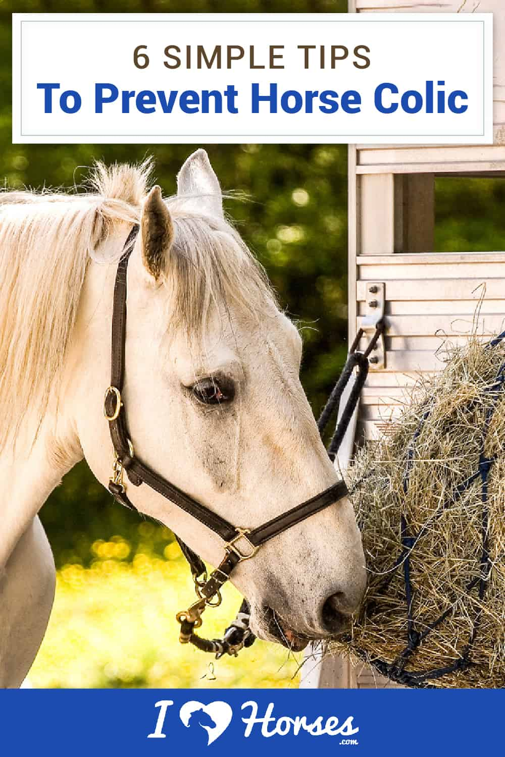 horse eating hay, tips to prevent horse colic