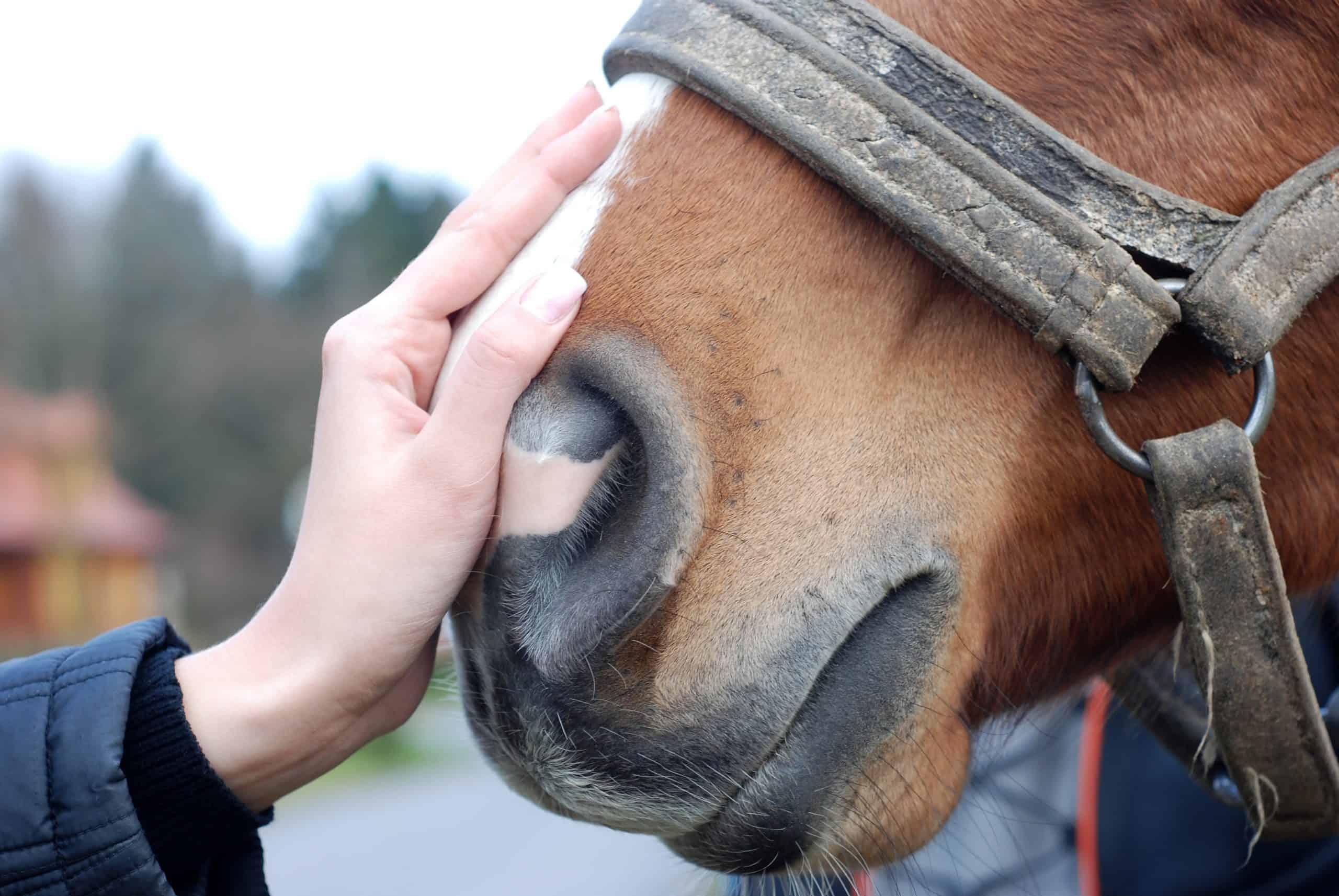 Hand stroke horse