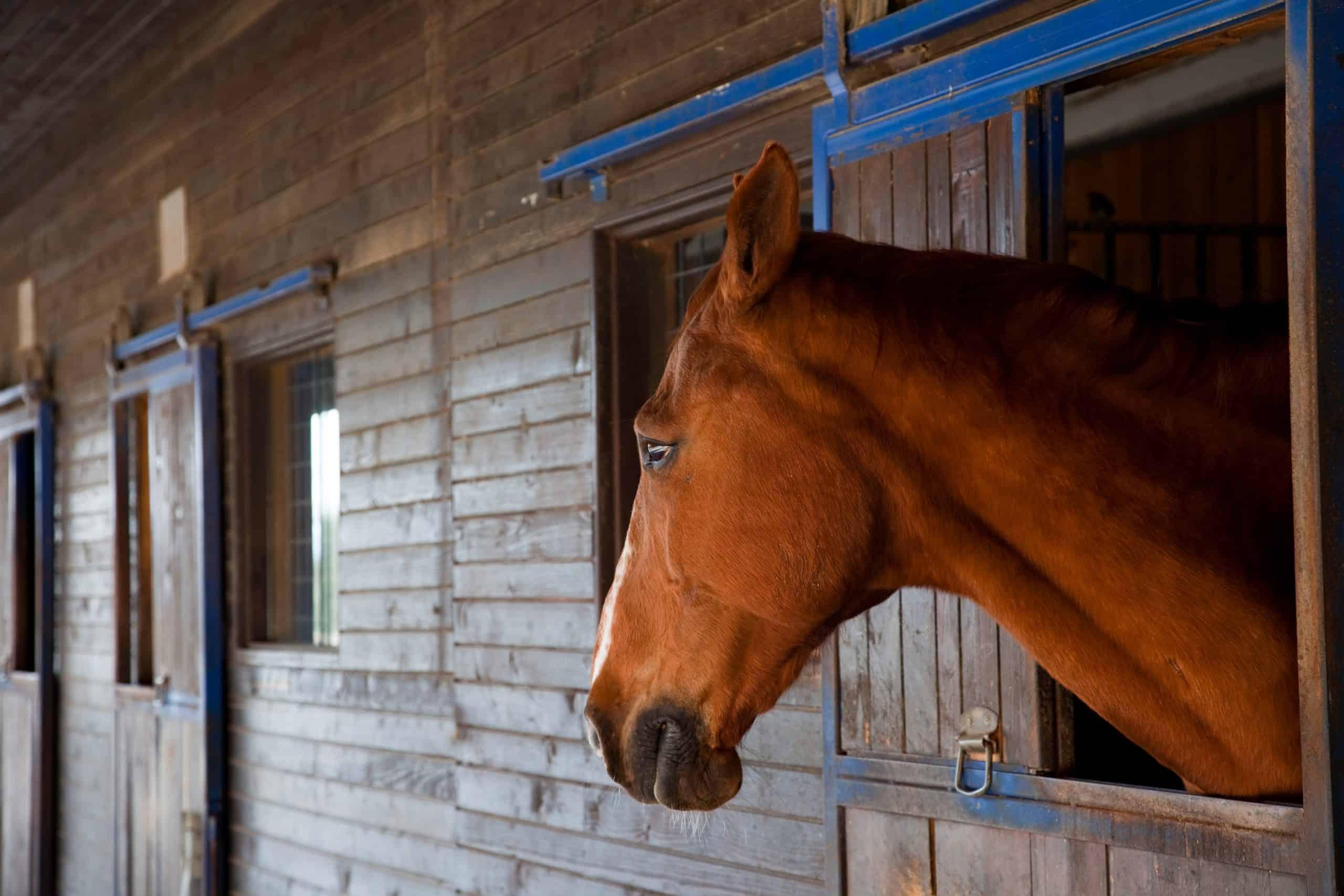 moody horse portrait 2