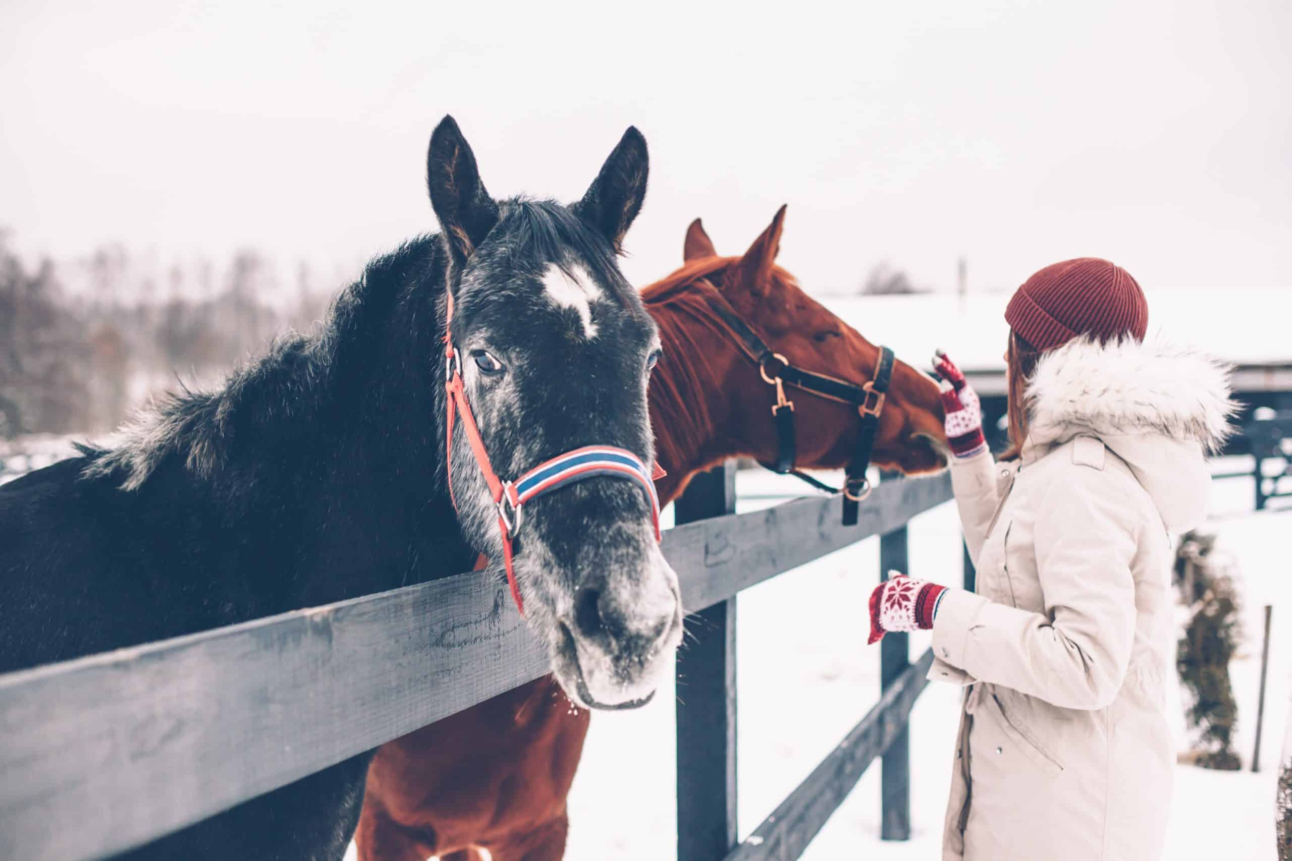 Photo of teenage girl touching a horse on the ranch in cold snowy day. Healthy winter vacations in countryside.