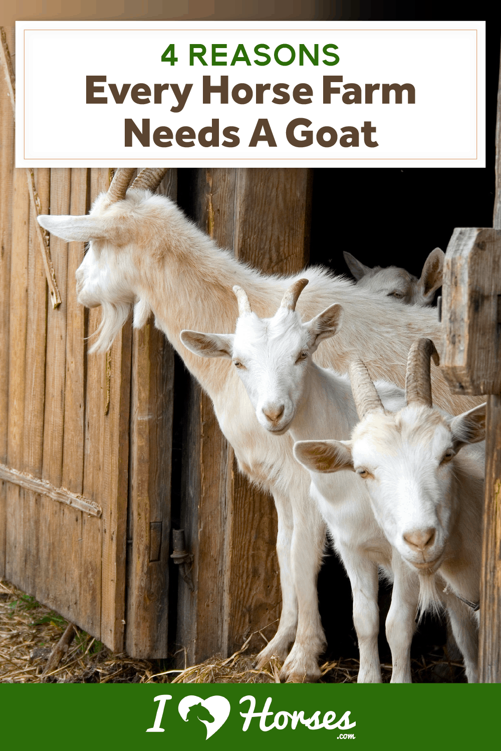 4 Reasons Every Horse Farm Needs A Goat-02