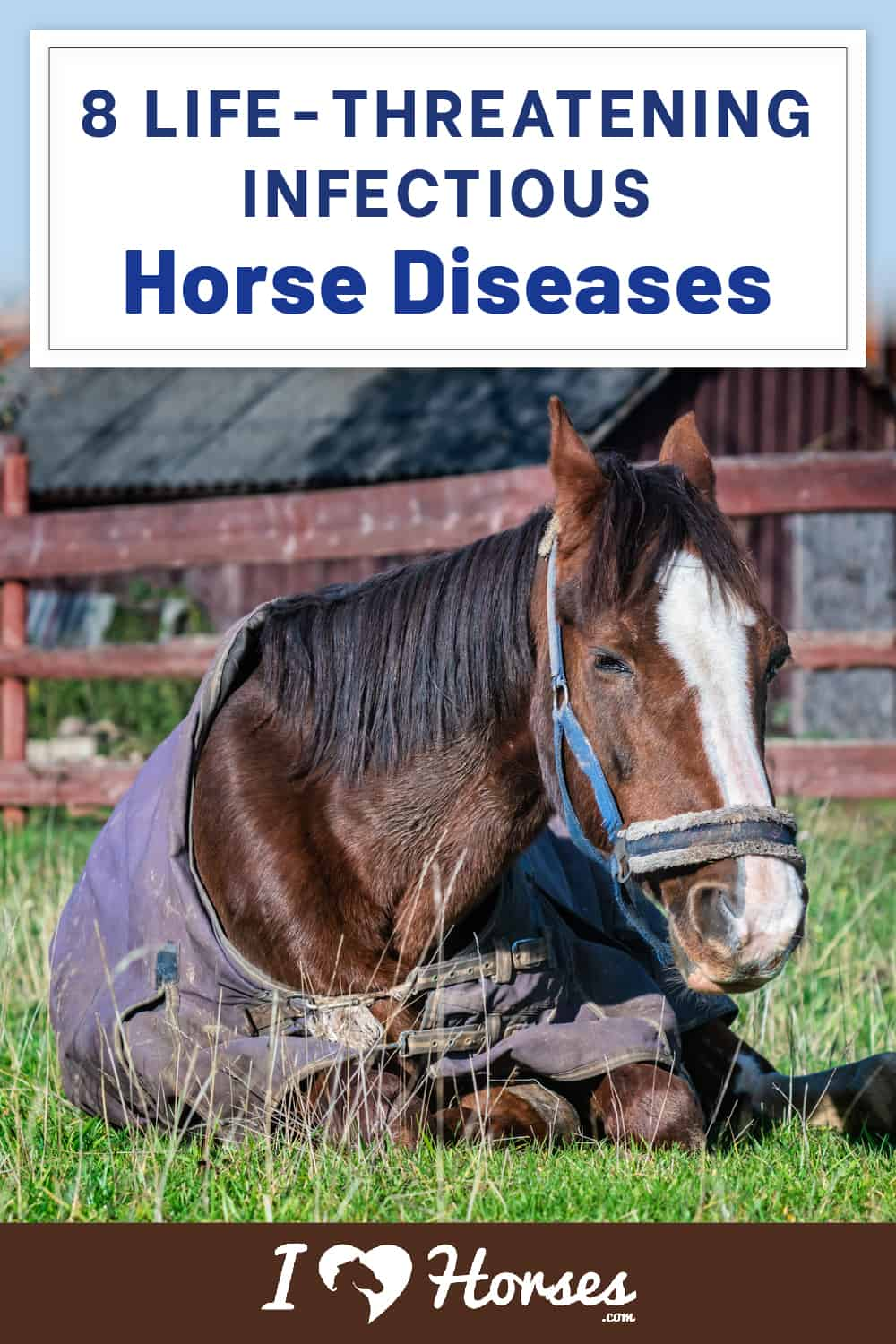 8 Life-Threatening Infectious Diseases In Horses-02