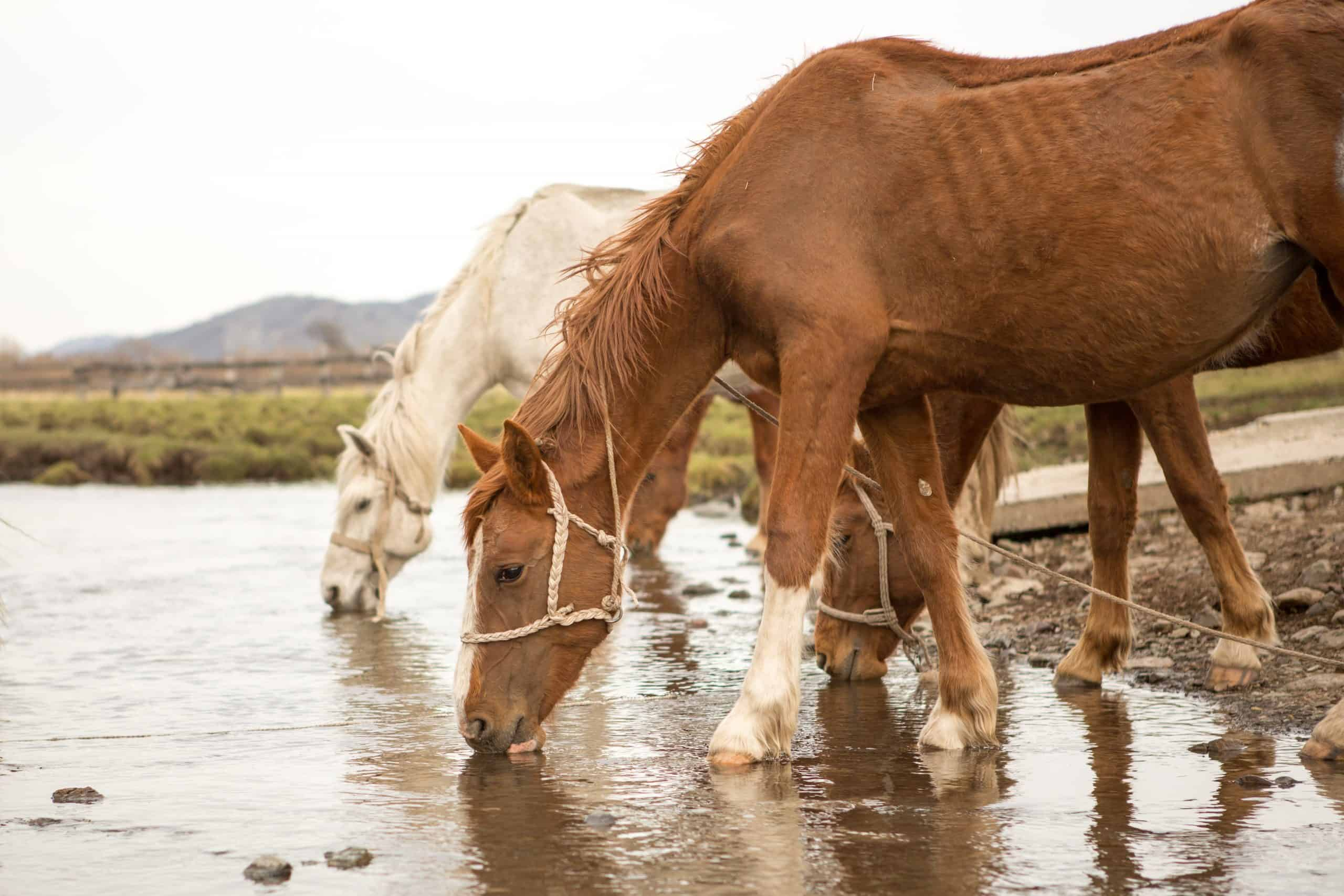 Horse drinking water diseases