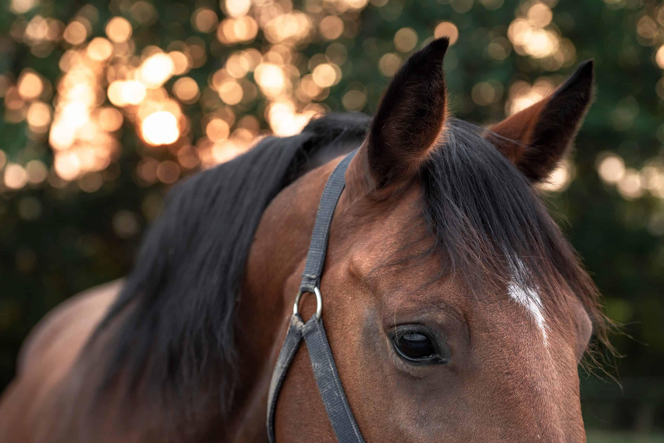 tetanus horse diseases