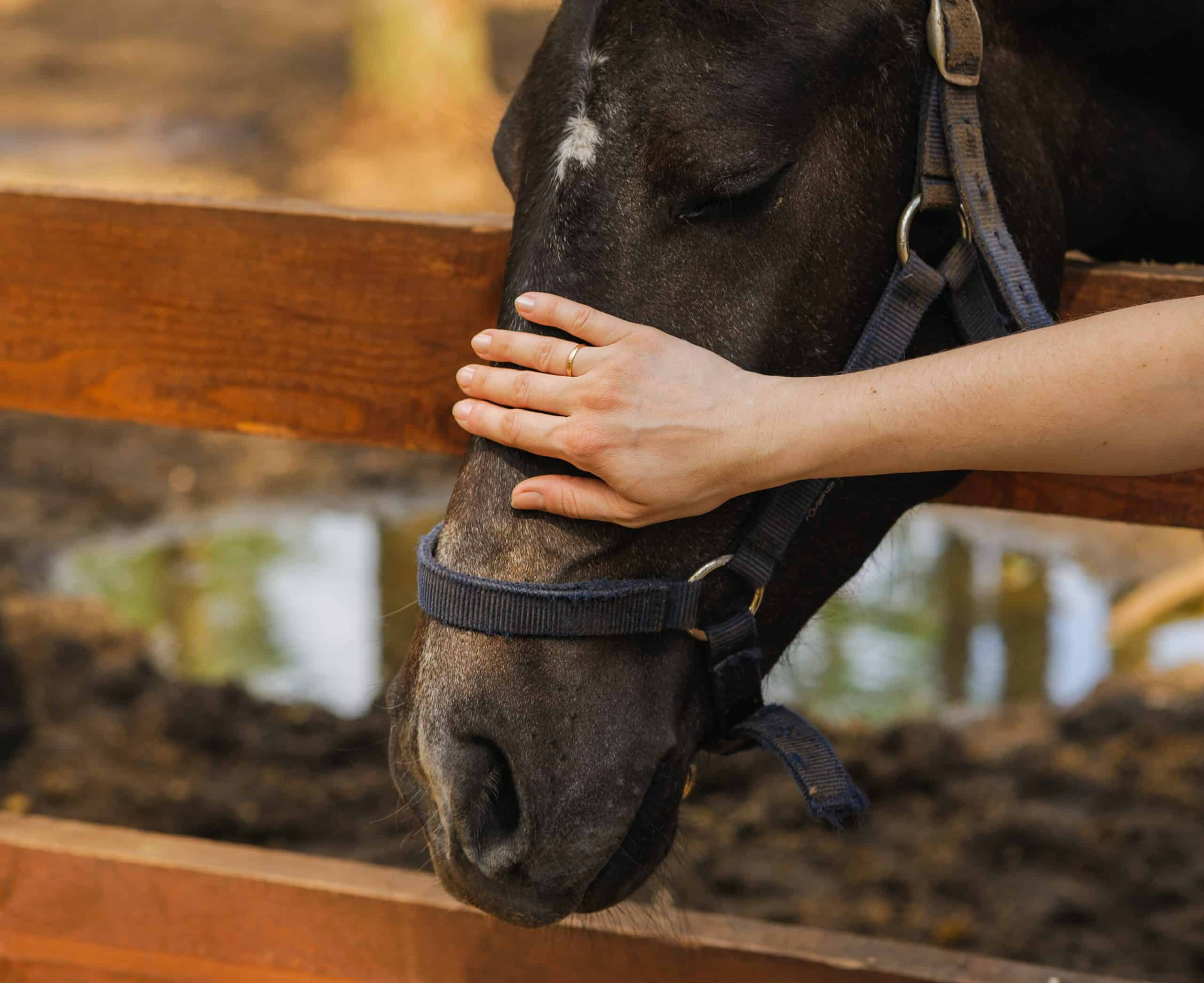 woman hand caress pet equine