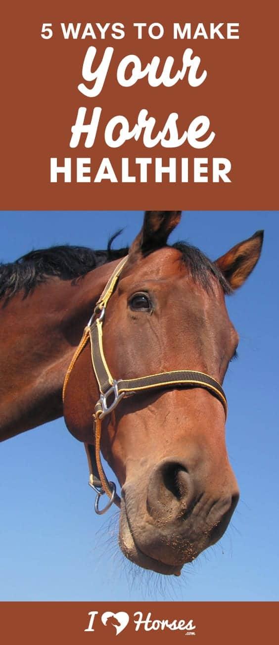 horse healthier