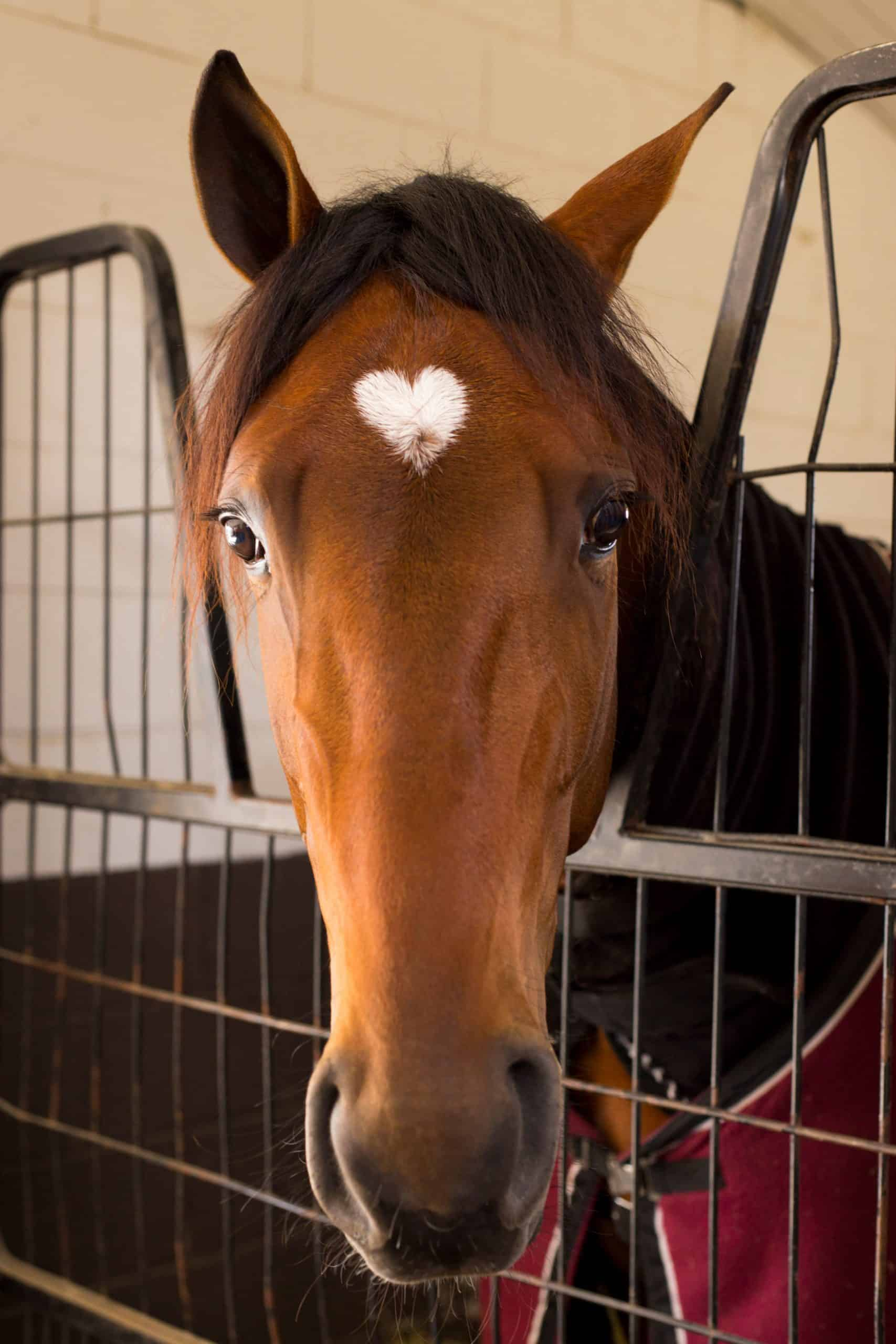 Horse with love marking on forehead