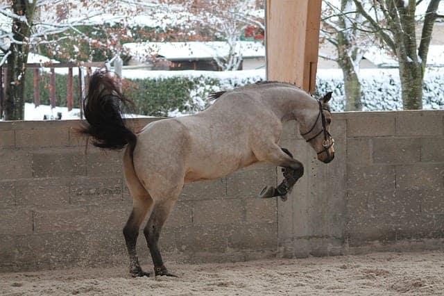 fall off a horse