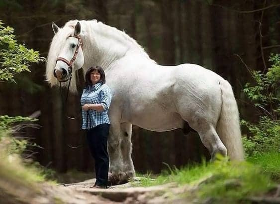 A Collection Of Draft Horses To Make You Swoon