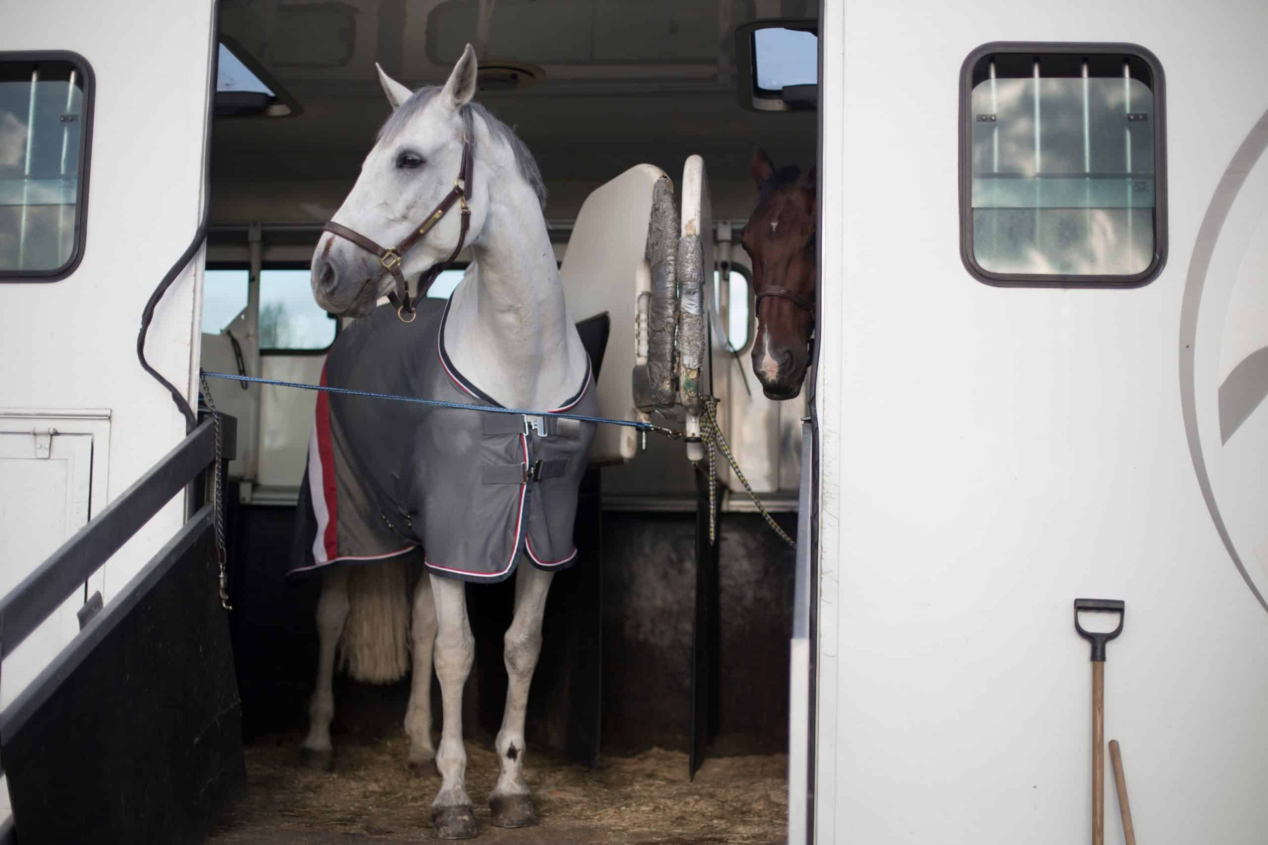 A horse is waiting with another horse inside a trailer