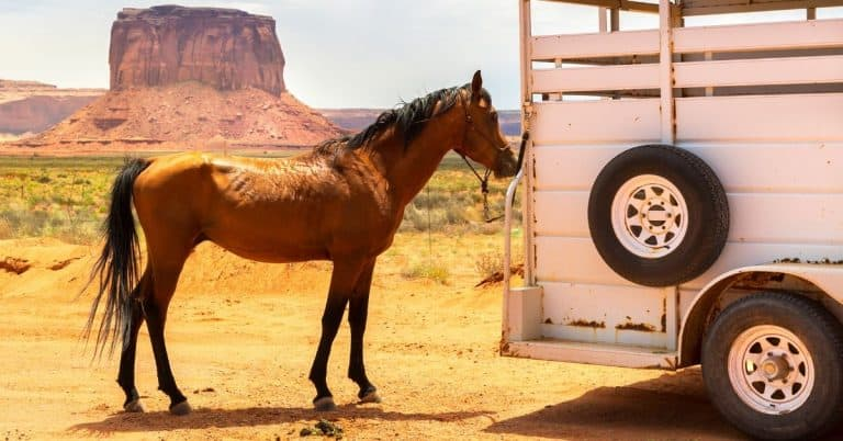 horse at trailer