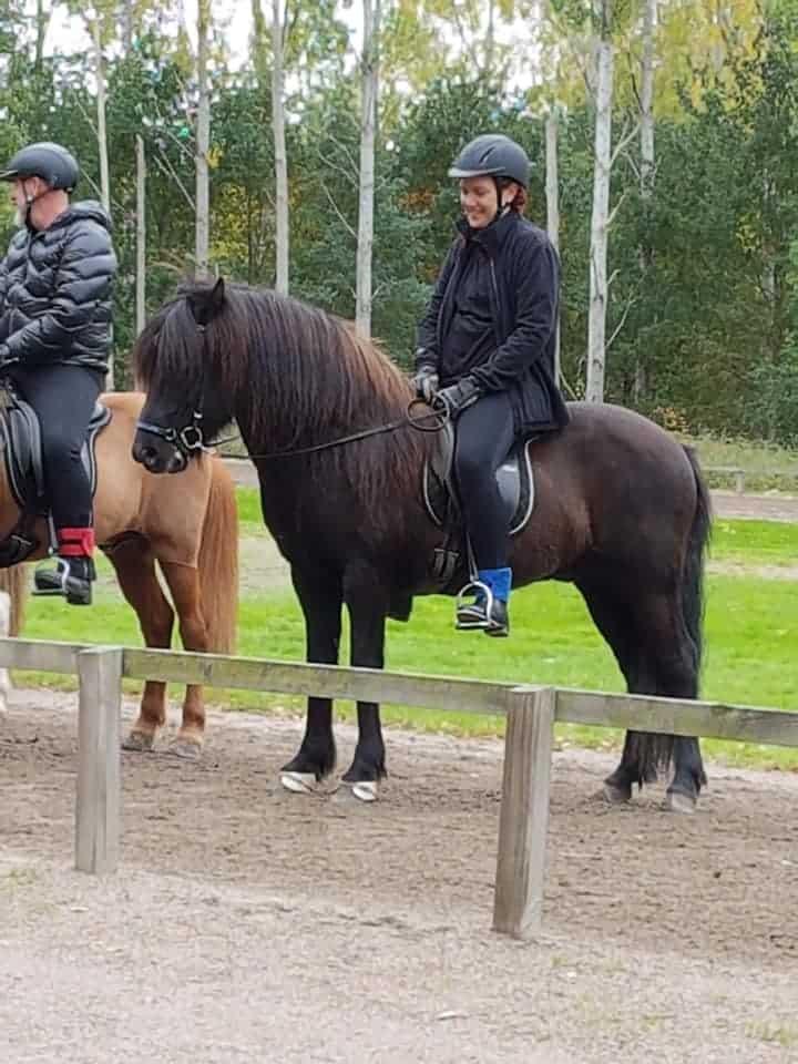 horse of the day reykur icelandic horse