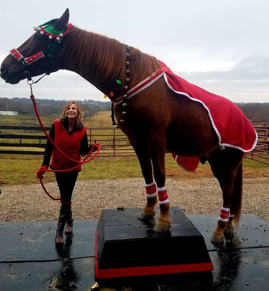 hank christmas horse of the day