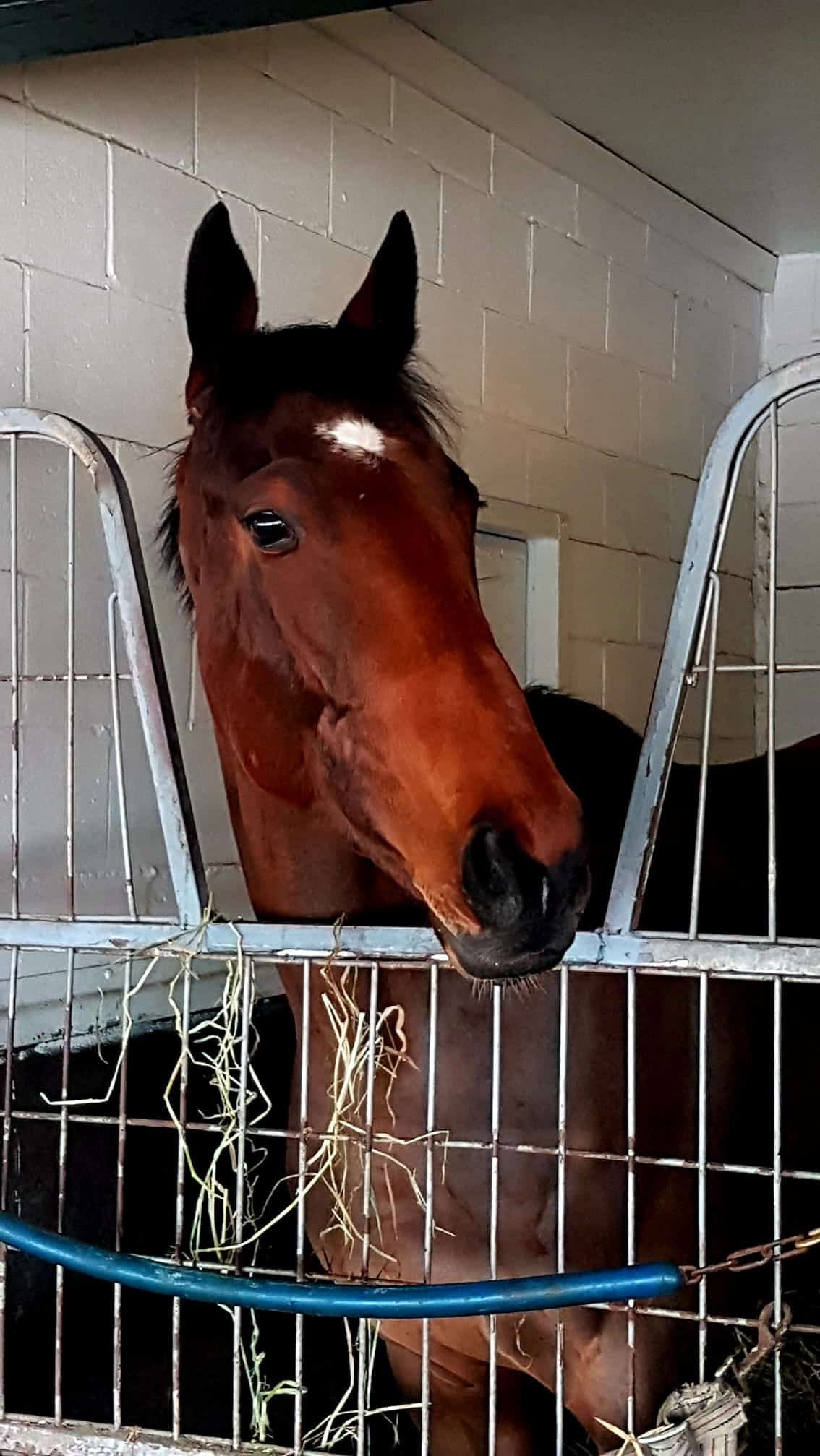 horse of the day the good witch