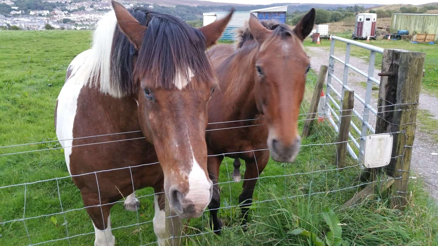 horse of the day indiana and april