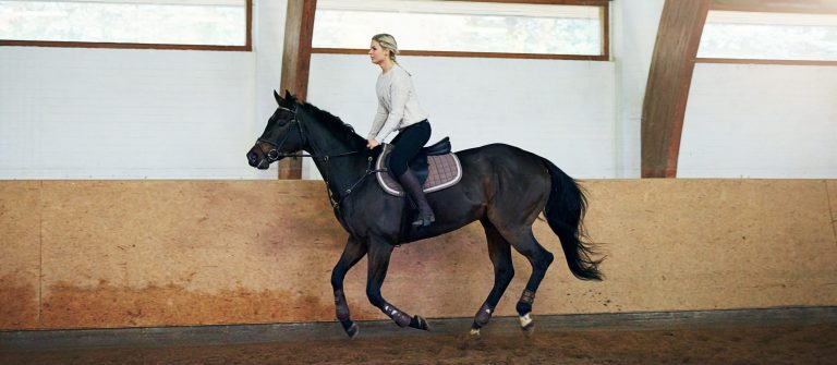 Short-haired woman on a black horse having a daily training
