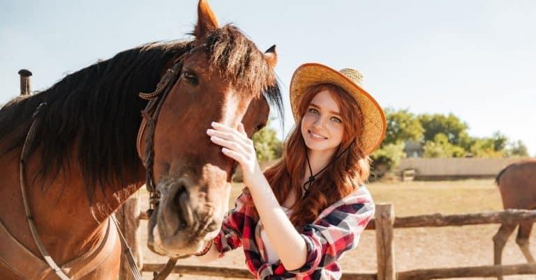 equestrian petting horse