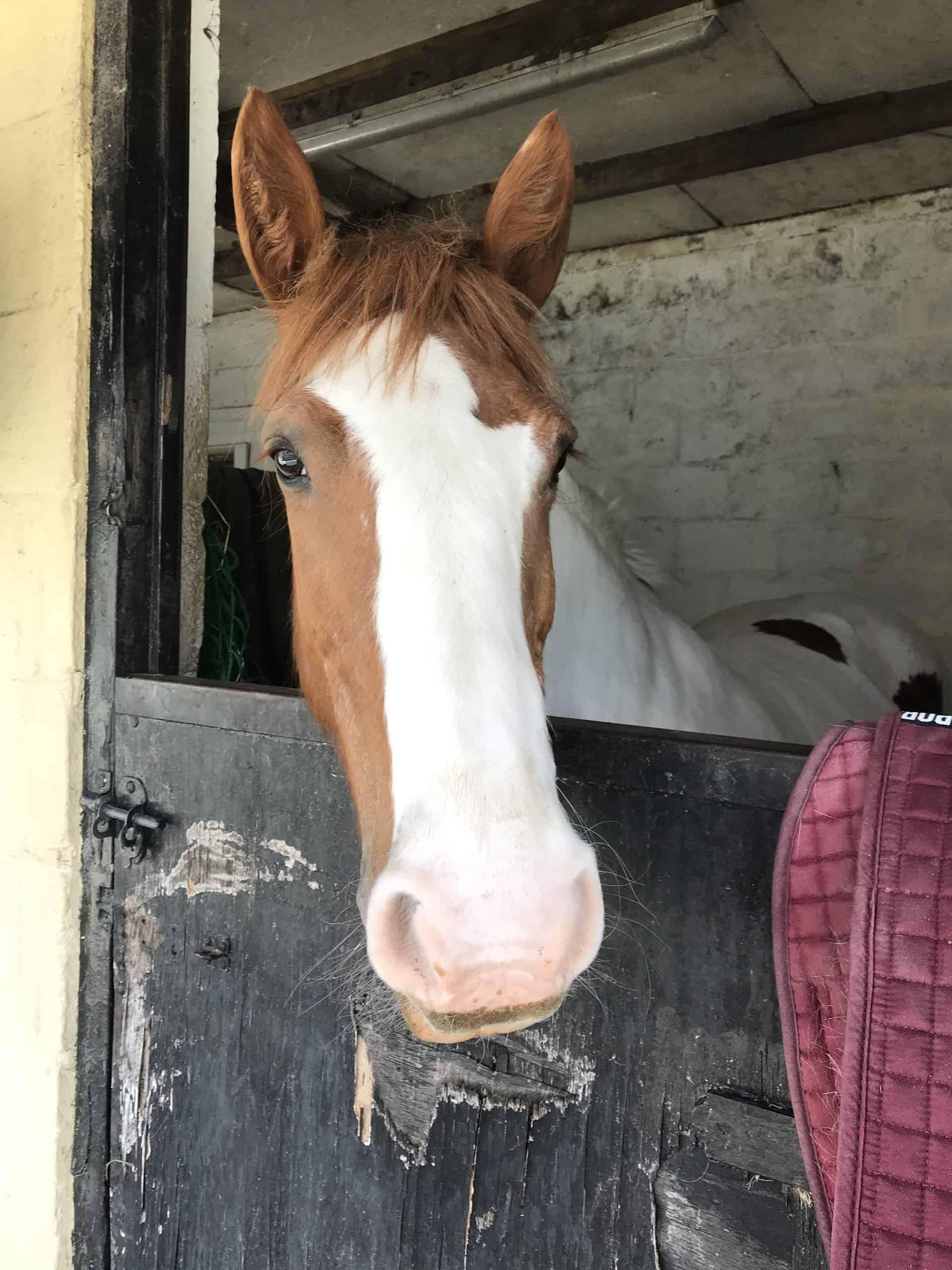 jasmine horse