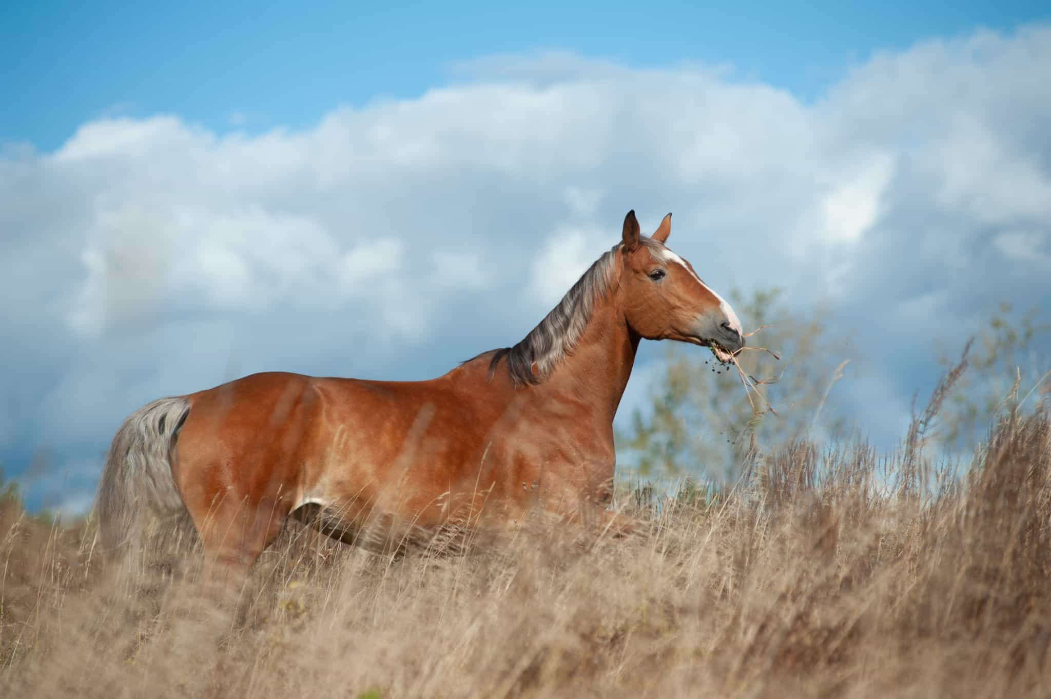 Palomino horse in the field grazing on freedom