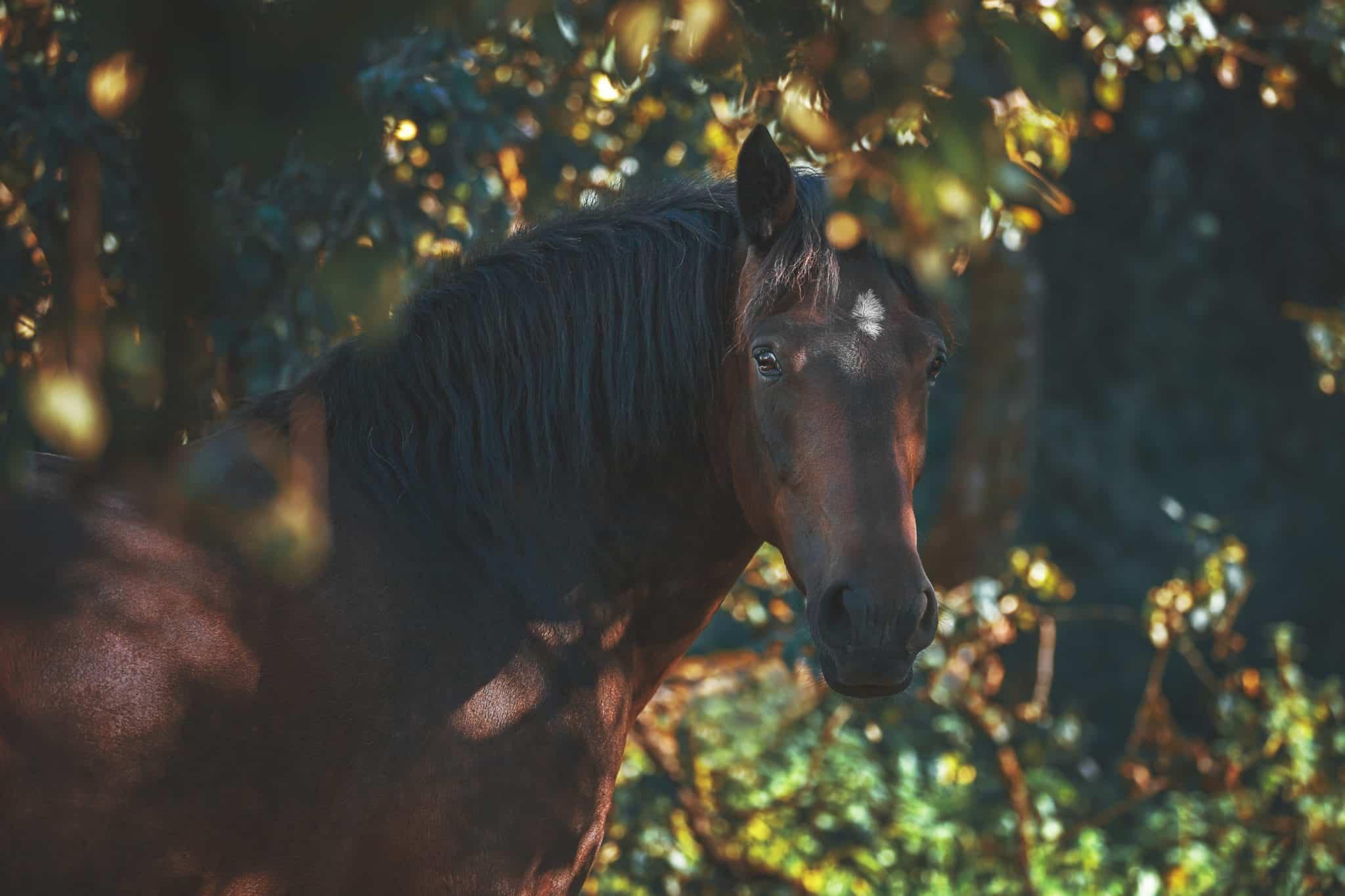 bay horse coat color