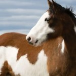 The 10 Most Common Horse Colors