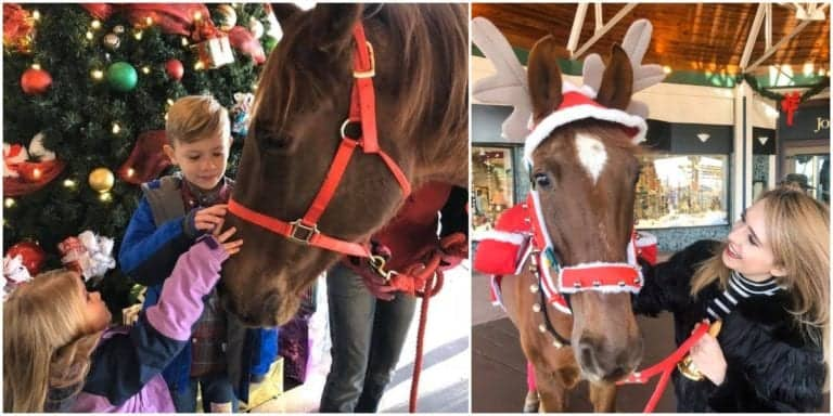 Hank the bell ringing horse