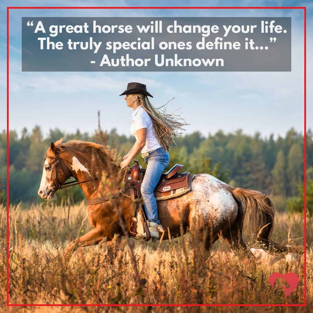 horse quote author unknown