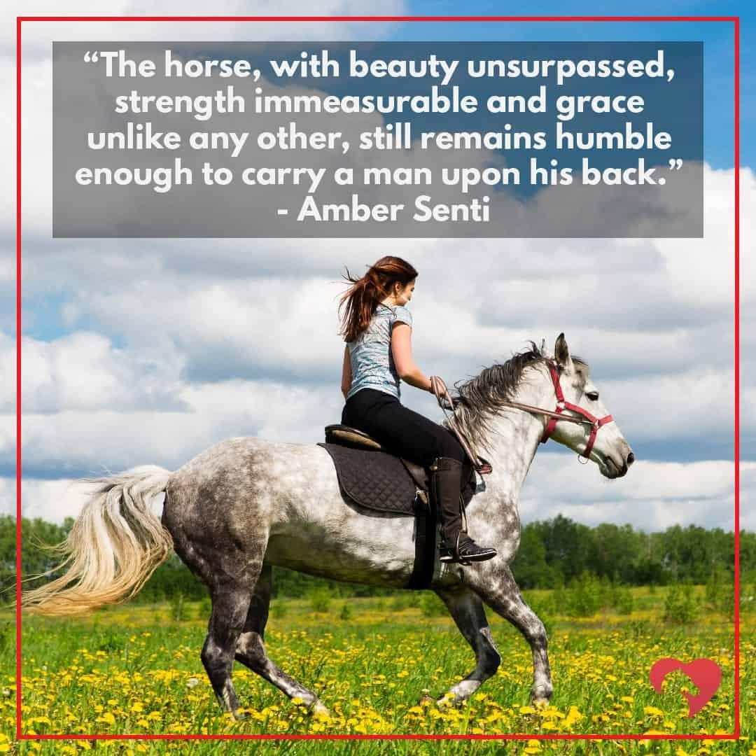 horse quote amber senti