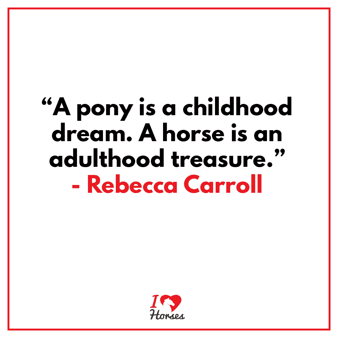 horse quote rebecca carroll