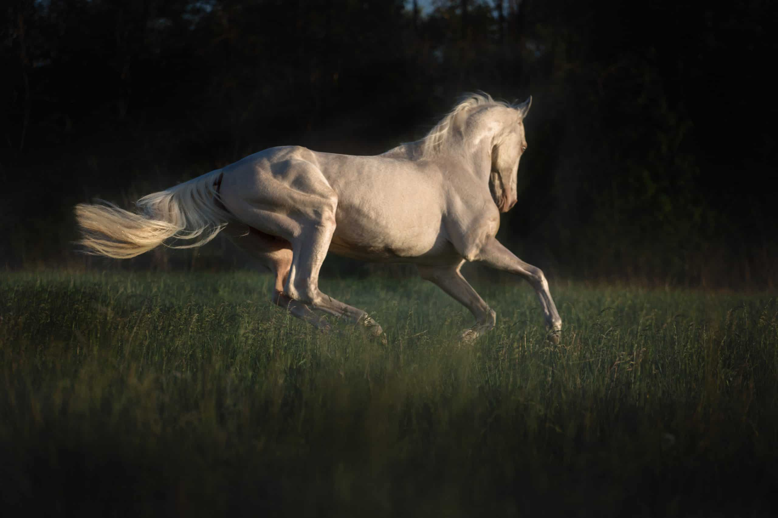 horse runs on the grass on dark forest background