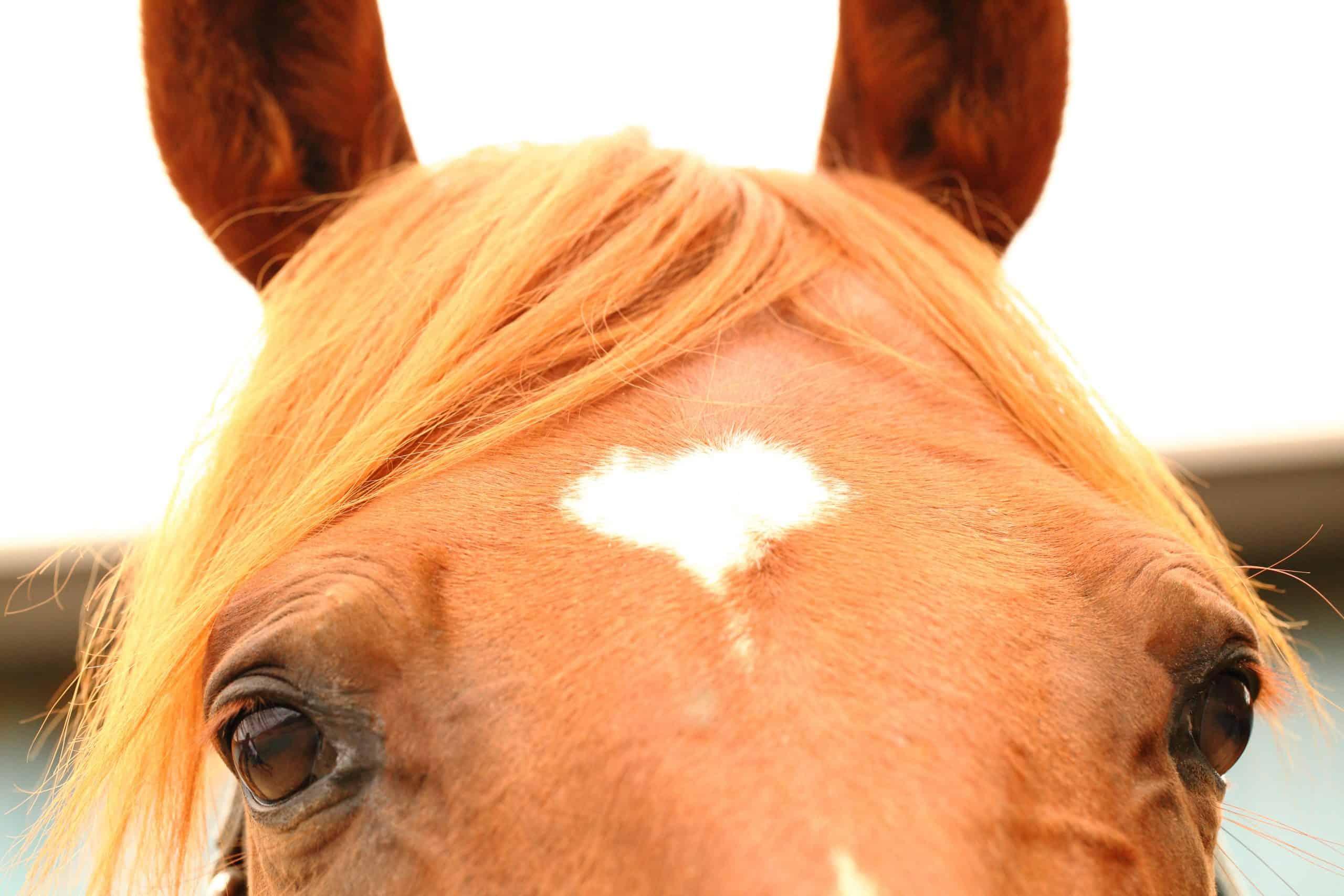 horse marking