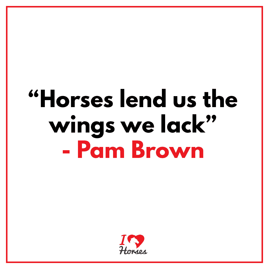 horses quote pam brown