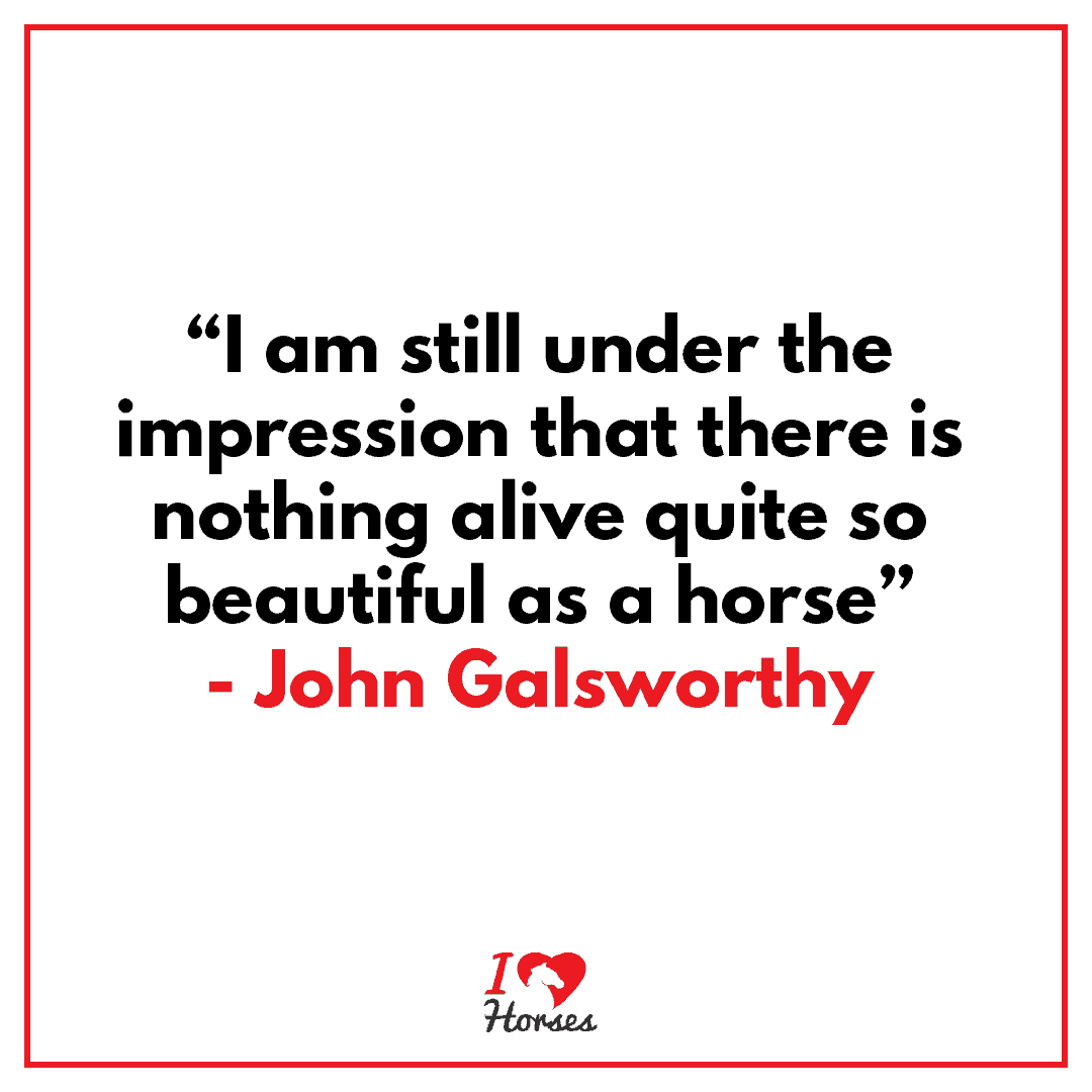 horse quote john galsworthy