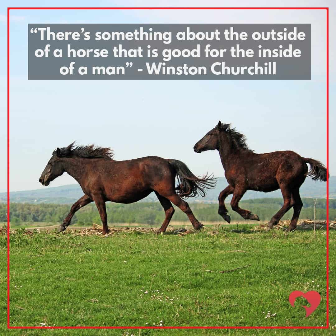 horse quotes winston churchill