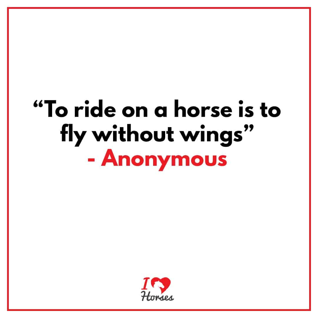 horse quote fly without wings