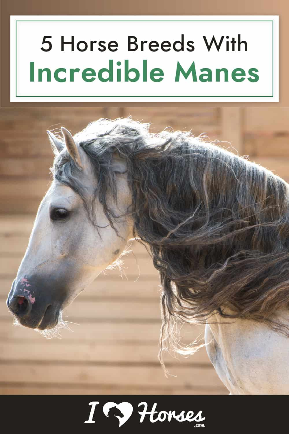5 Horse Breeds With Incredible Manes