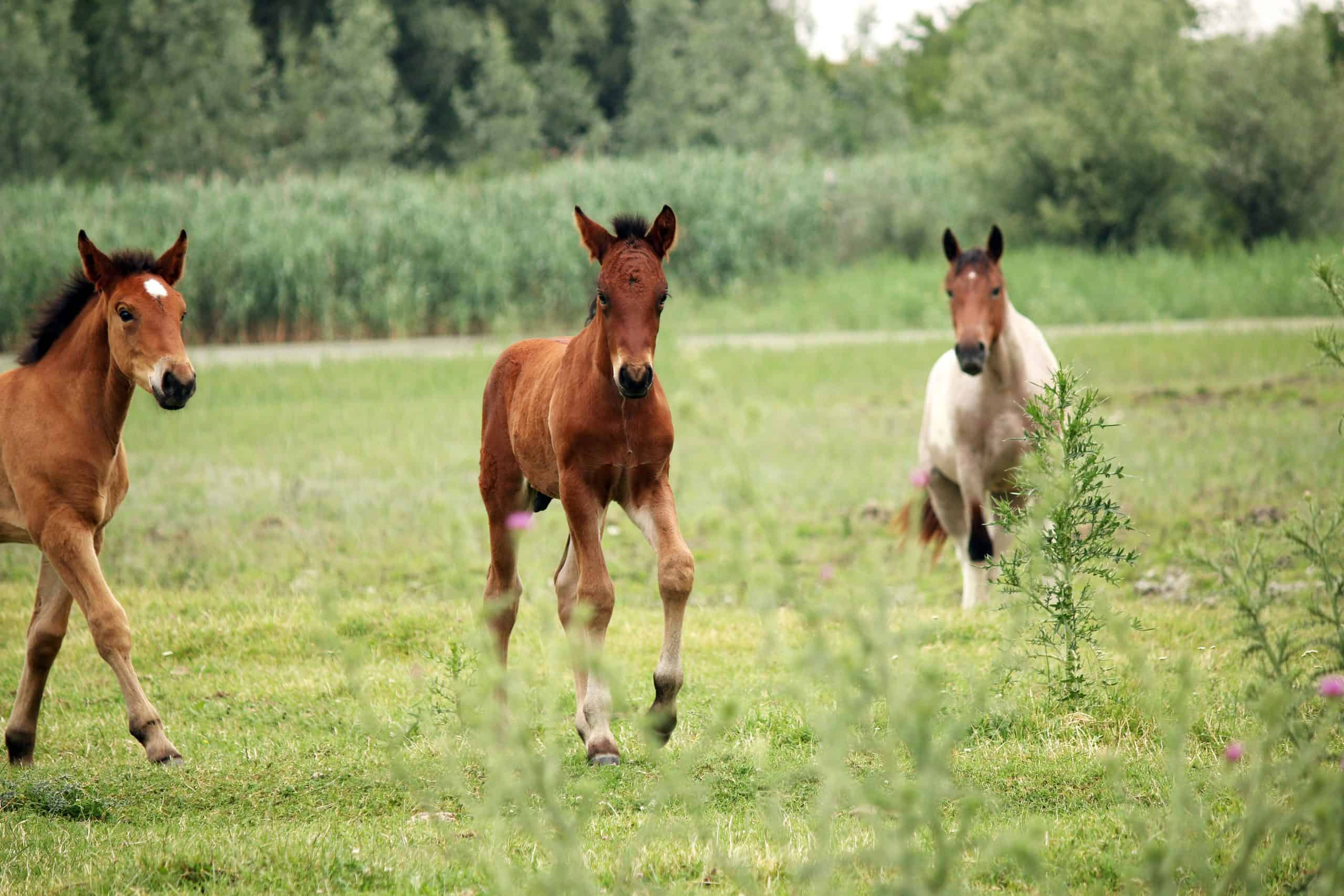 horses and foals on field