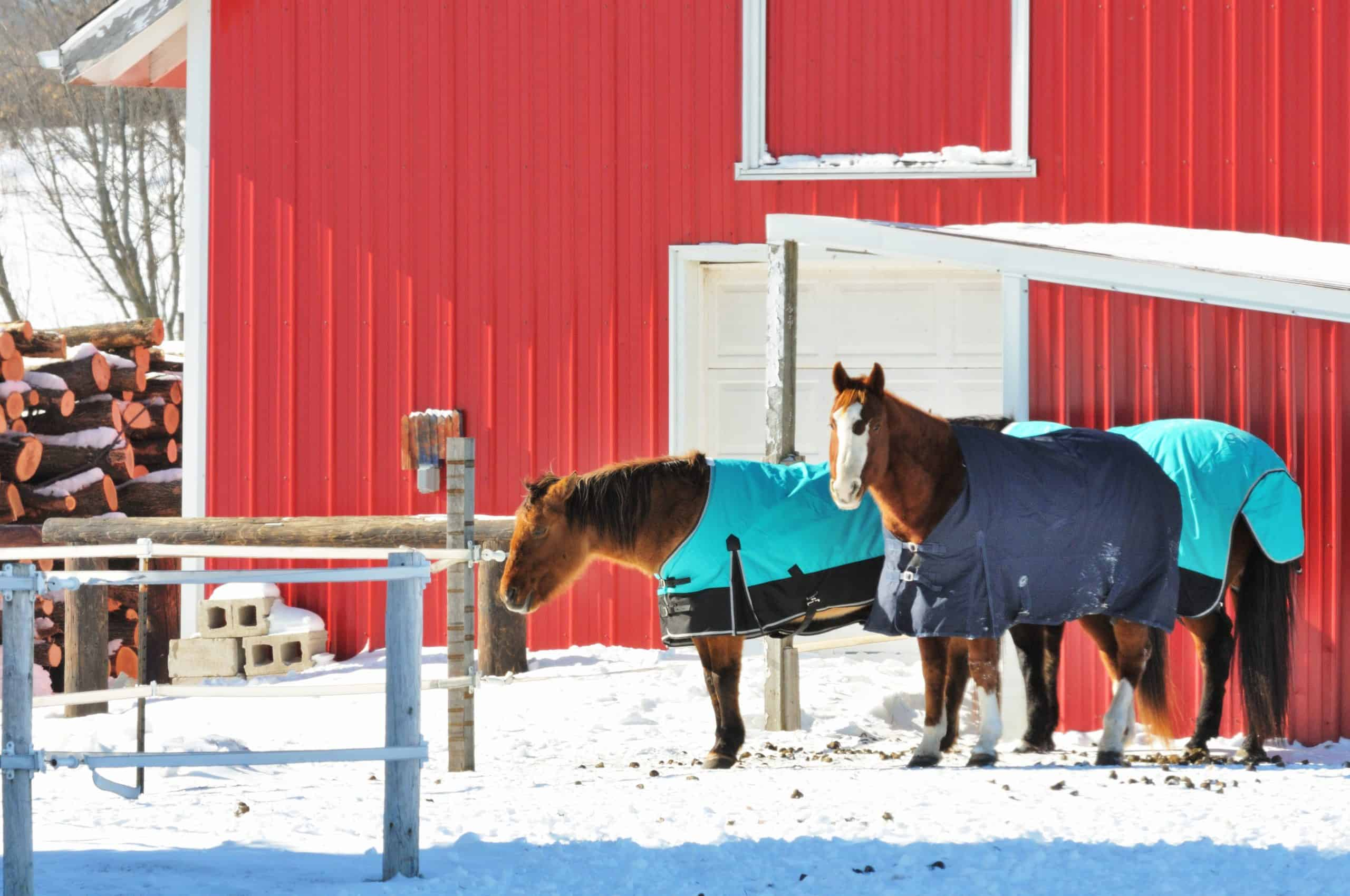 Three horses wearing blue blankets in winter corral.
